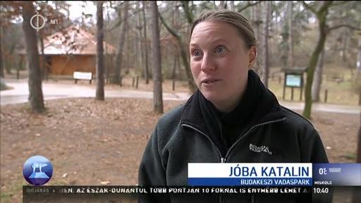 Jóba Katalin, állatgondozó, Budakeszi Vadaspark