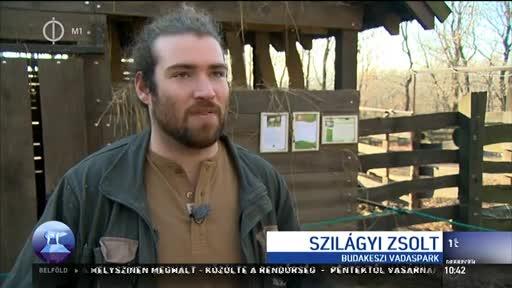Szilágyi Zsolt, állatgondozó, Budakeszi Vadaspark