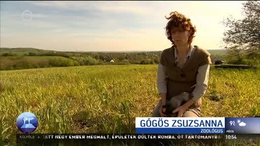 Gőgös Zsuzsanna, zoológus