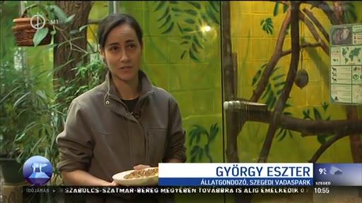 György Eszter, állatgondozó, Szegedi Vadaspark
