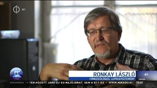 Ronkay László, főmuzeológus, Lepkegyűjtemény, Magyar Természettudományi Múzeum