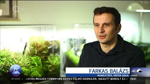 Farkas Balázs, munkatárs, Green Aqua