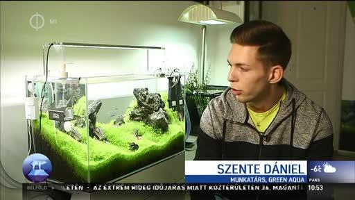 Szente Dániel, munkatárs, Green Aqua